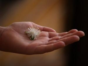 Une offrande fleurie de Sacha